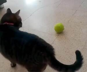 i like playing with the ball too