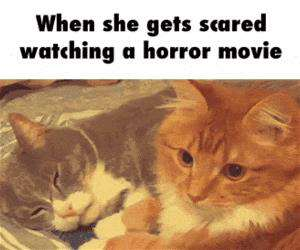 a horror movie