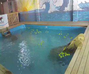 awesome dog pool