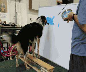 dog is painting something nice