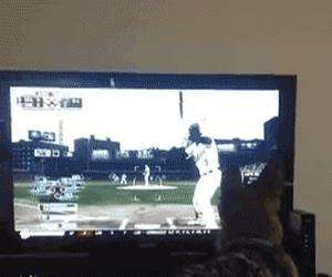 dog playing some baseball
