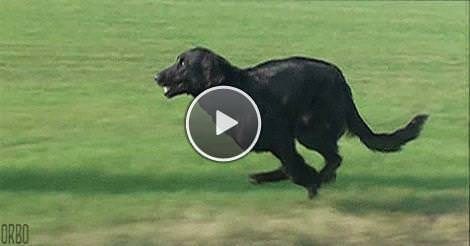 Pictures Of The Fastest Dog In The World