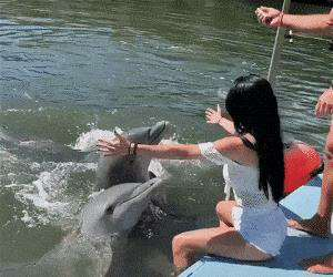how this dolphin says hello