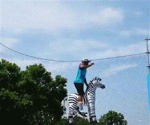 jumping zebra tricks