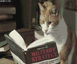 military strategy cat