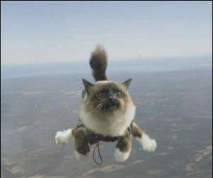 skydiving cat548