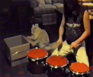 this cat is a hell of a drummer