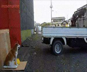 this dog is helping with the parking