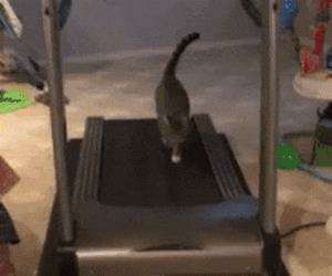 treadmill cat working out