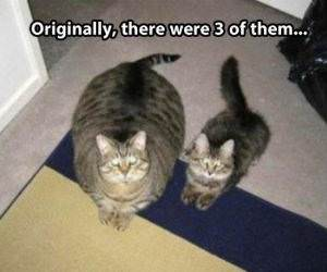 There Was 3 Cats funny picture