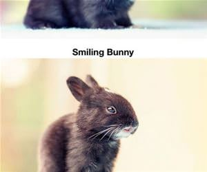 30 days of bunny growth funny picture