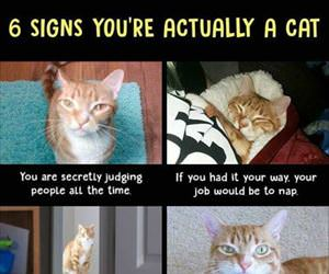 6 signs you are a cat