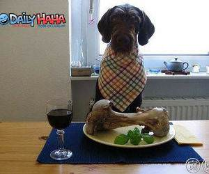 Doggy Dining Picture
