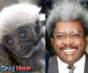 Don King Vs Monkey