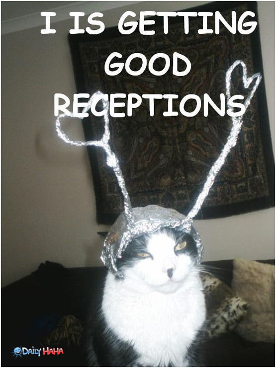 Good Reception Cat