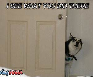 I See What you Did funny picture