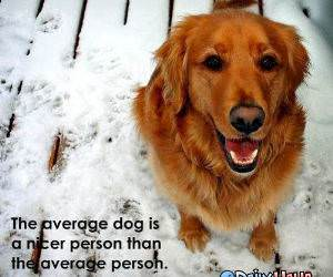 Nice Dog funny picture