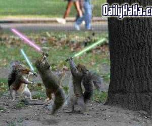 Squirrels Fighting