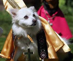 The Popes Dog