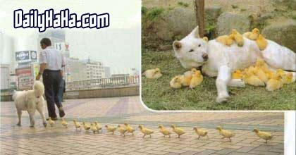Puppy with Chicks
