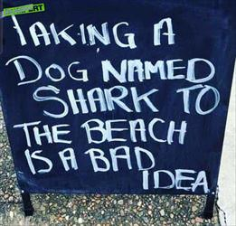 a dog named shark