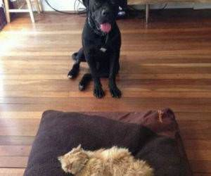 New Dog Bed funny picture