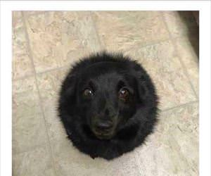 a new type of black hole
