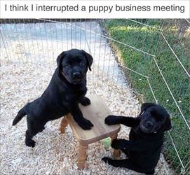 a very important business meeting