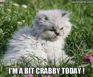 a bit crabby funny picture