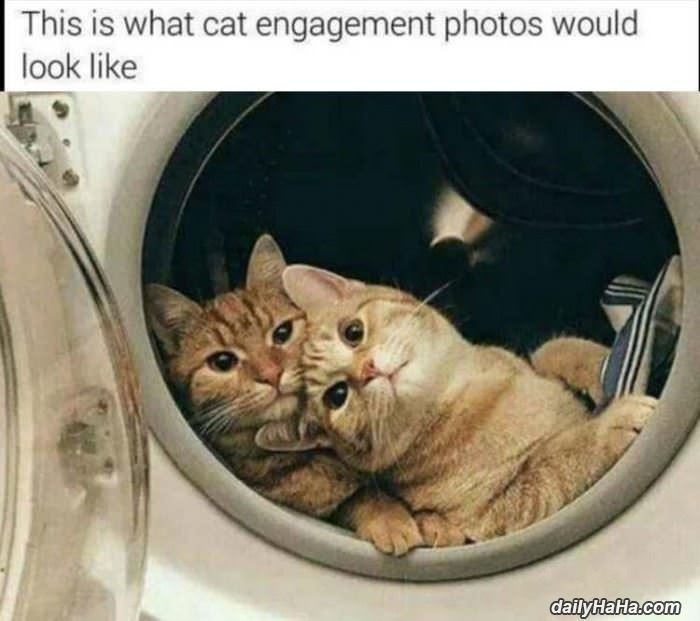 a cat engagement photo funny picture