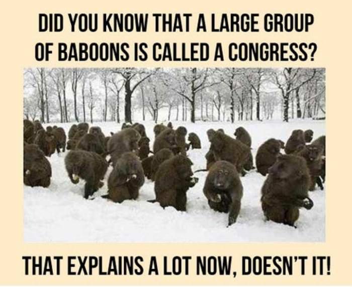 a_congress.jpg