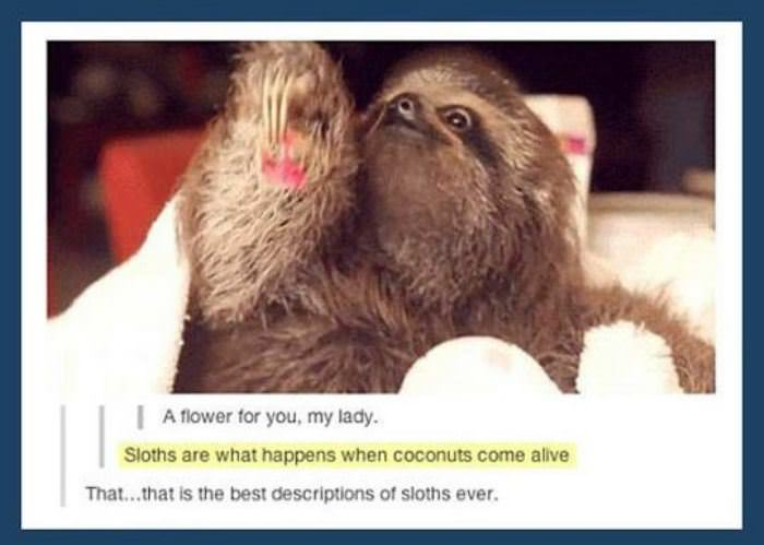 a description of sloths funny picture