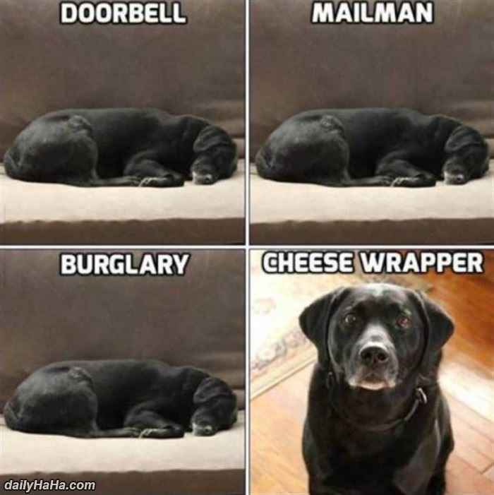 a dogs priorities funny picture