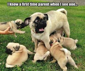 a first time parent funny picture