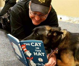 a good bedtime story funny picture