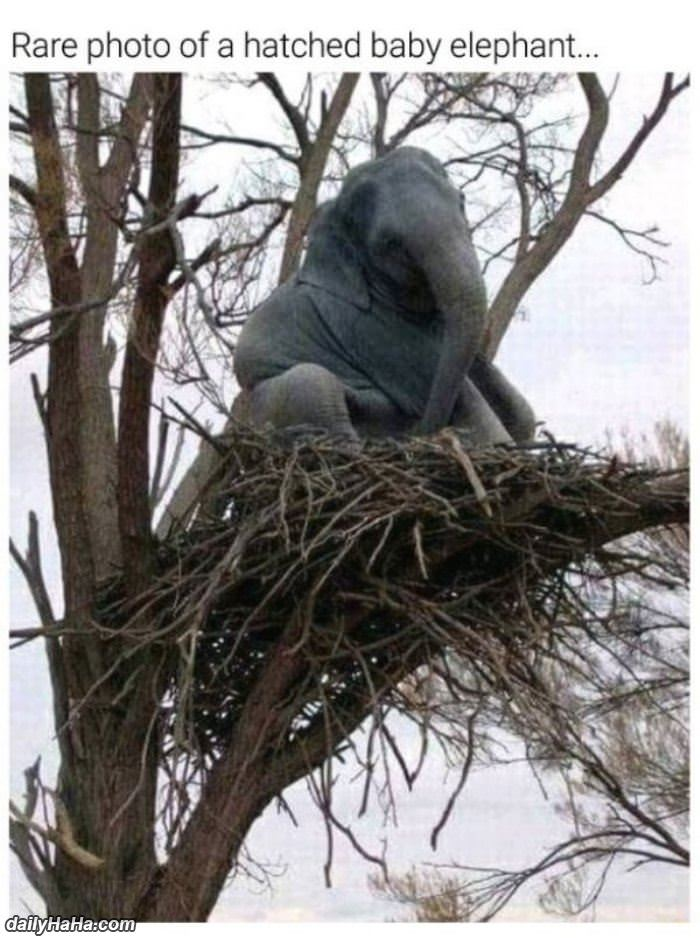 a hatched baby elephant funny picture