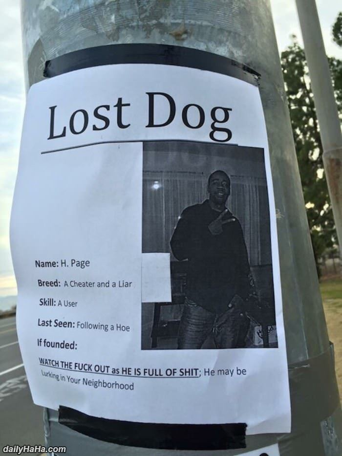 a lost dog funny picture