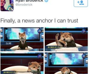 a news anchor funny picture