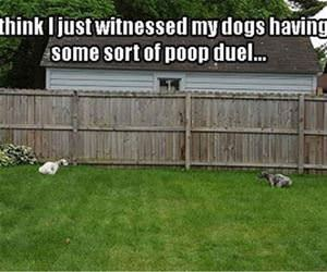 a poop duel funny picture