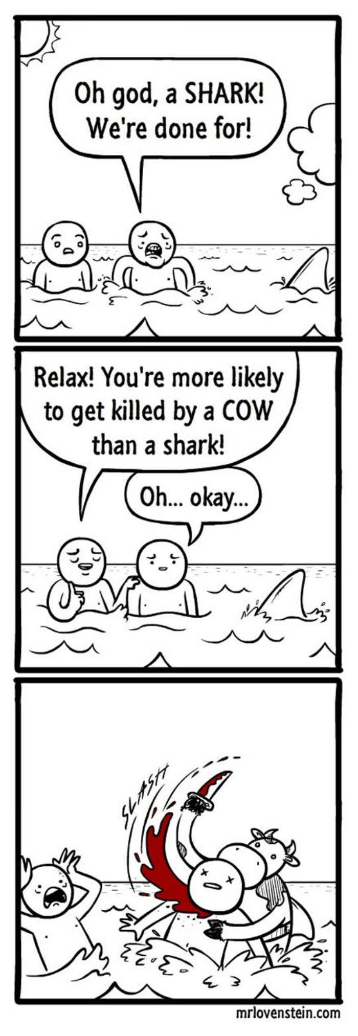 a shark funny picture