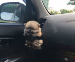 a tiny puppy holder funny picture