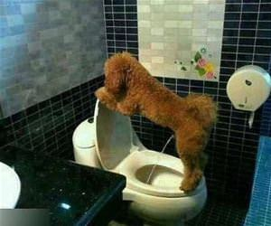 a very potty trained dog funny picture
