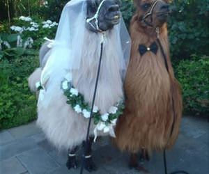 a wonderful wedding funny picture