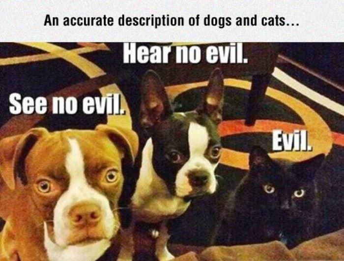 accurate description for dogs