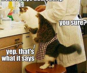 Add Cat Nip funny picture