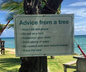advice from a tree funny picture