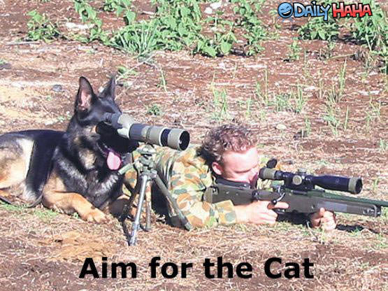 Aim for Cats