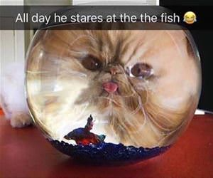 all day he stares at the fish funny picture