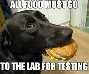 all food must be tested funny picture
