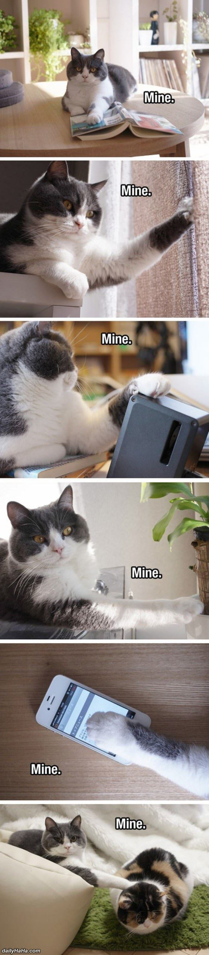 dailyhaha die or funny hilarious pictures
